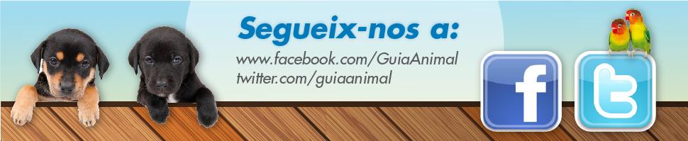 Segueix-nos a Facebook i Twitter